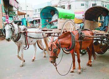 Horse Kudhirai 1''